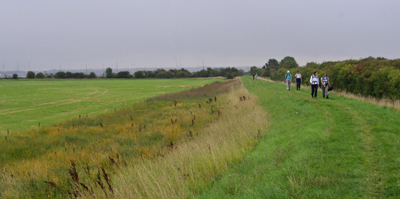 On the Humber floodbank/photo by Arnold Underwood, 4th Sept 2011