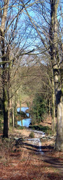 Woods and ponds at Ganthorpe/from a photo by Arnold Underwood/March 2006