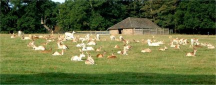 Deer in Ripley Park/photo by Arnold Underwood/Oct 2003