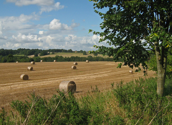 Harvest time near Terrington /photo by Arnold Underwood,Sept 2008