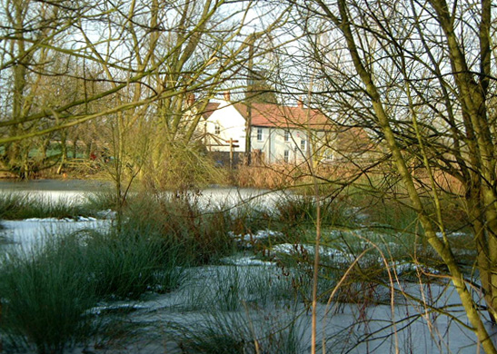 Frost on Wauldby pond/photo by Arnold Underwood/Jan 2003